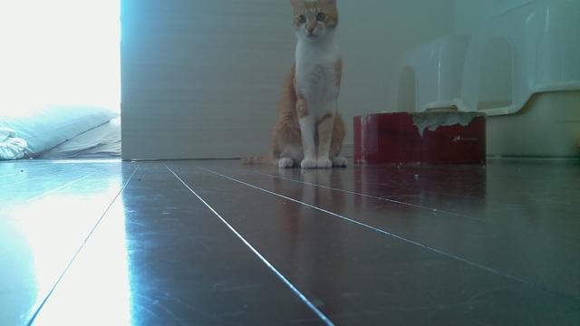 Raspberry Pi ネコ観察カメラの運用をGooglePhotoAPIsに移行する