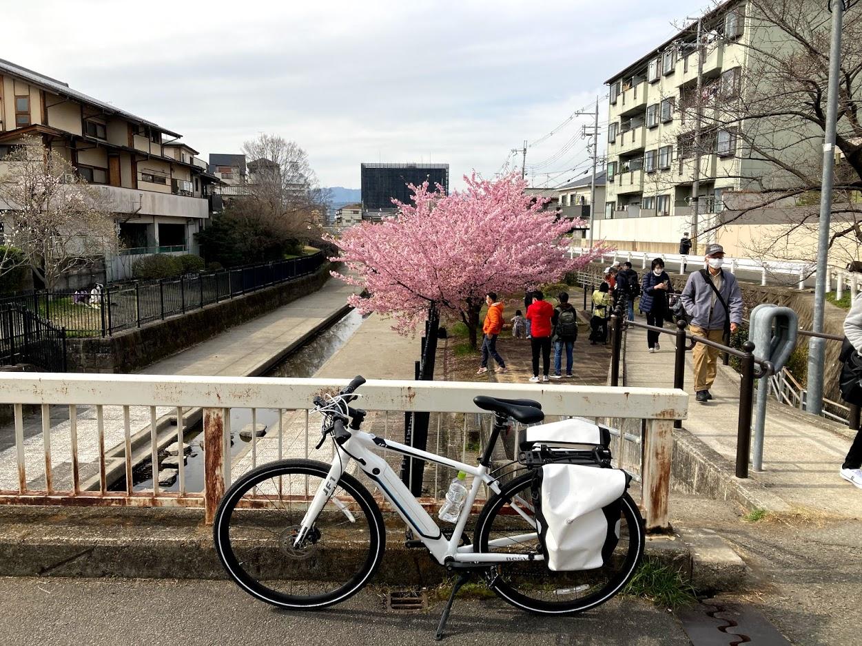 BESV JF1 で淀水路の河津桜を見に行こう